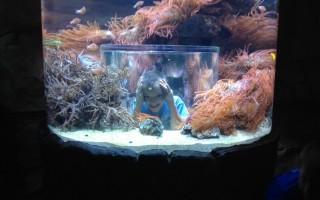 Sea World in Orlando, Florida