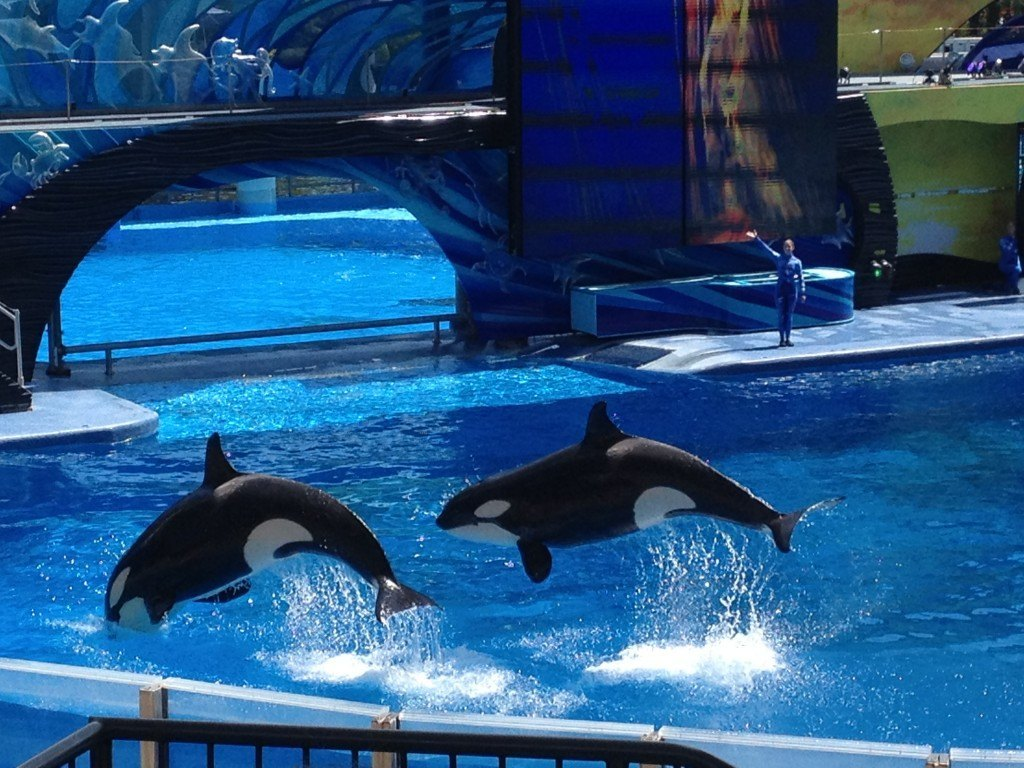 Sea_World_Whales