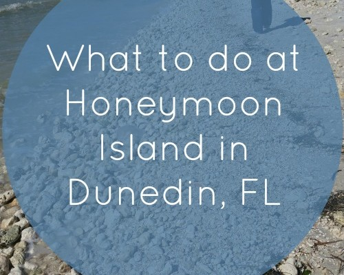 Honeymoon Island State Park in Dunedin, Florida
